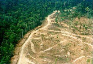 Pelatihan Pedoman Pinjam Pakai Kawasan Hutan Untuk Pertambangan, Kehutanan dan Perkebunan